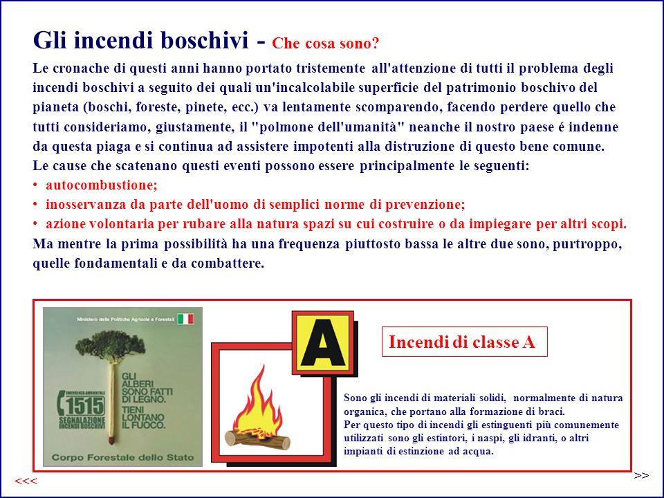 Gli incendi boschivi - Che cosa sono