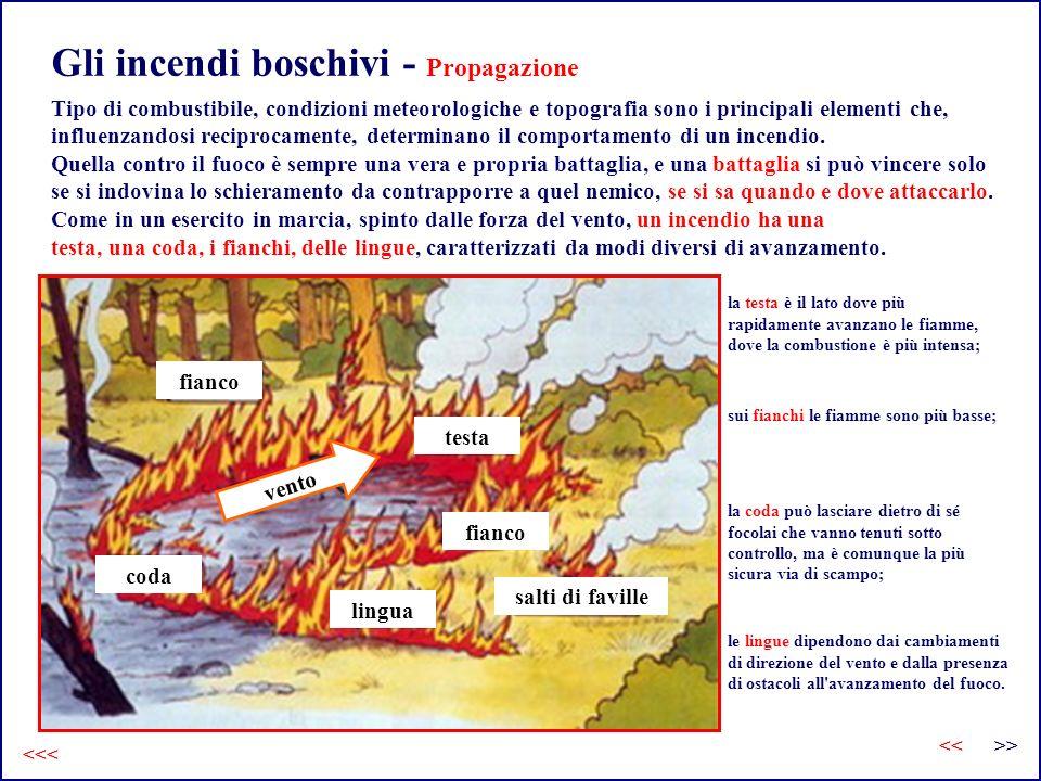 Gli incendi boschivi - Propagazione