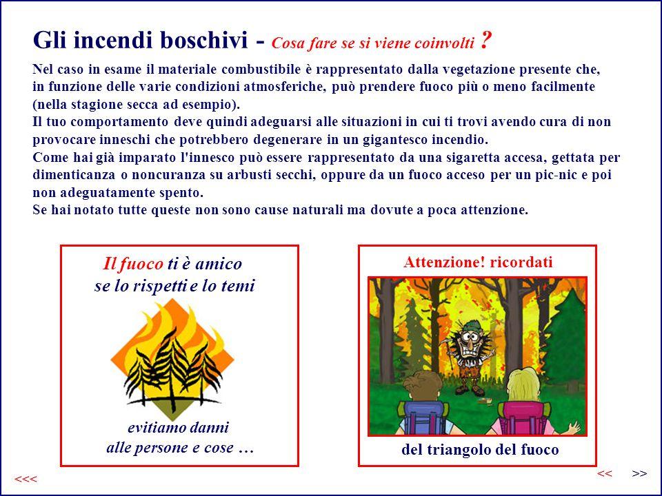 Gli incendi boschivi - Cosa fare se si viene coinvolti