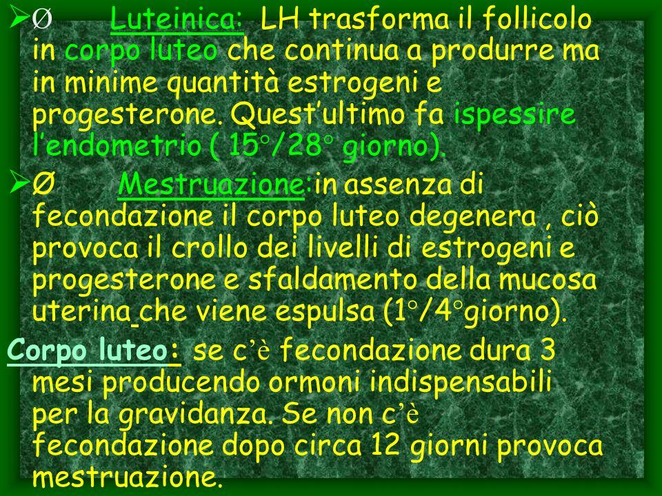 Ø Luteinica: LH trasforma il follicolo in corpo luteo che continua a produrre ma in minime quantità estrogeni e progesterone. Quest'ultimo fa ispessire l'endometrio ( 15°/28° giorno).