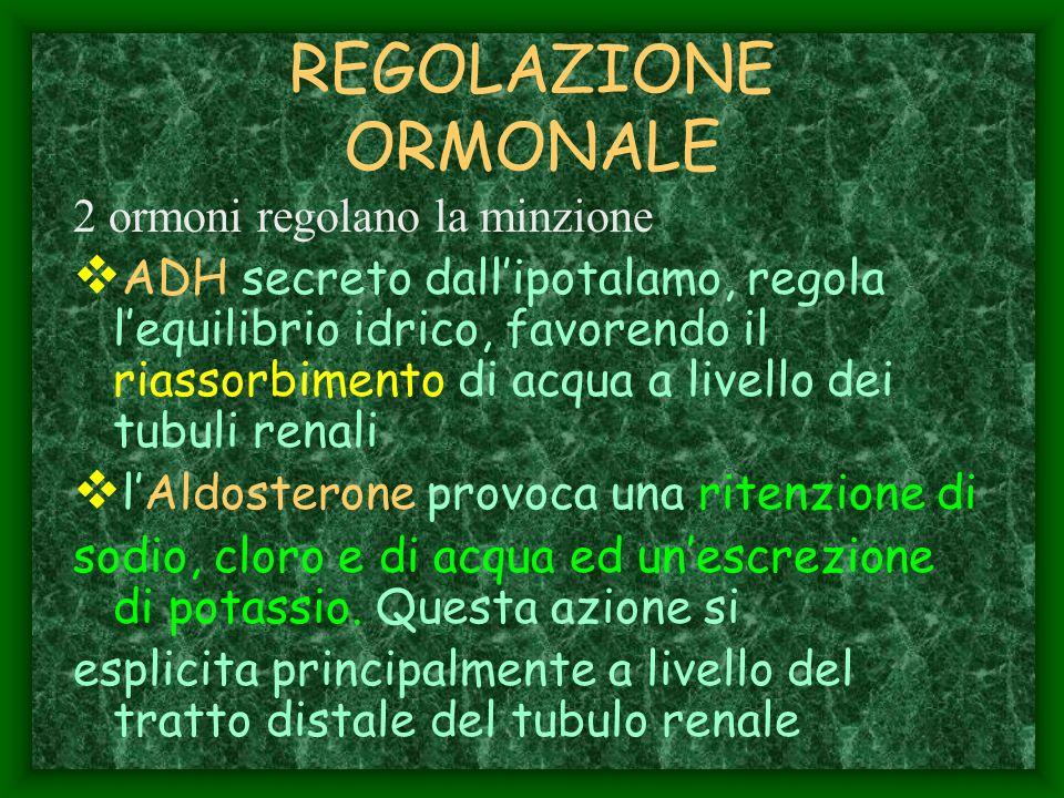 REGOLAZIONE ORMONALE 2 ormoni regolano la minzione