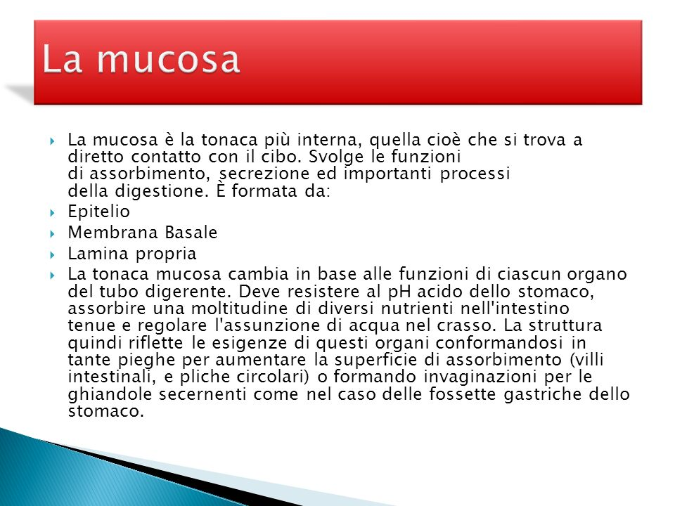 La mucosa