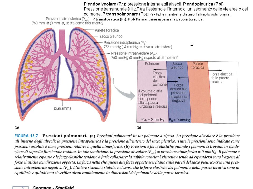 P endoalveolare (PA): pressione interna agli alveoli
