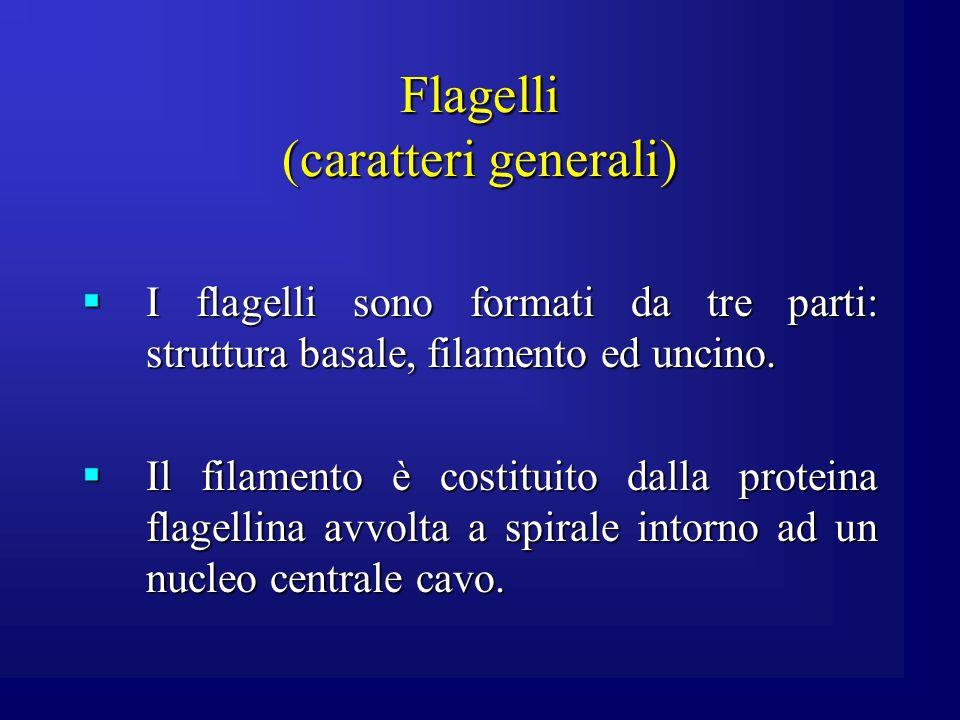 Flagelli (caratteri generali)