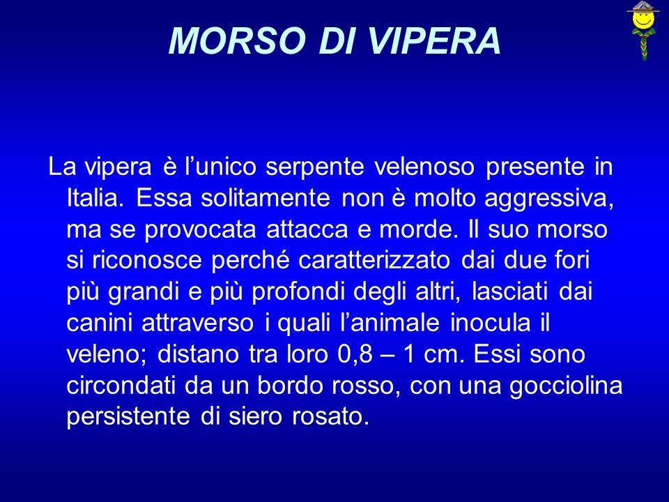 MORSO DI VIPERA