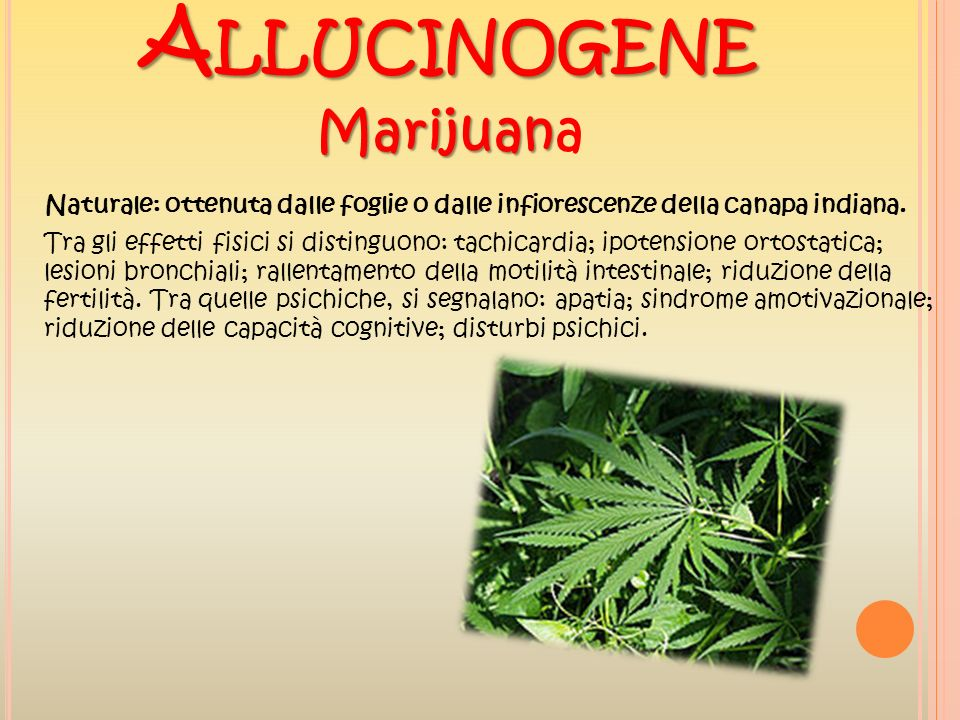 Marijuana Allucinogene