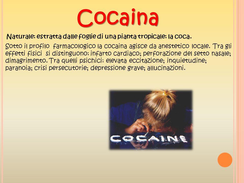 Cocaina Naturale: estratta dalle foglie di una pianta tropicale: la coca.