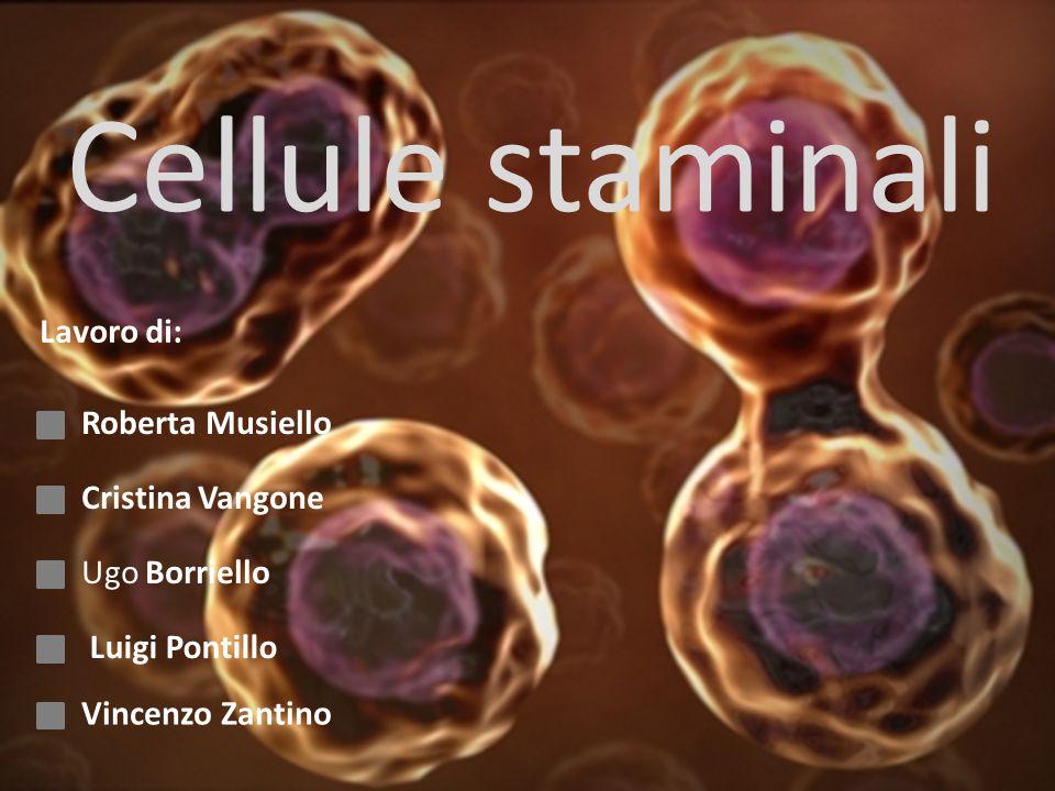 Cellule staminali Lavoro di: Roberta Musiello Cristina Vangone