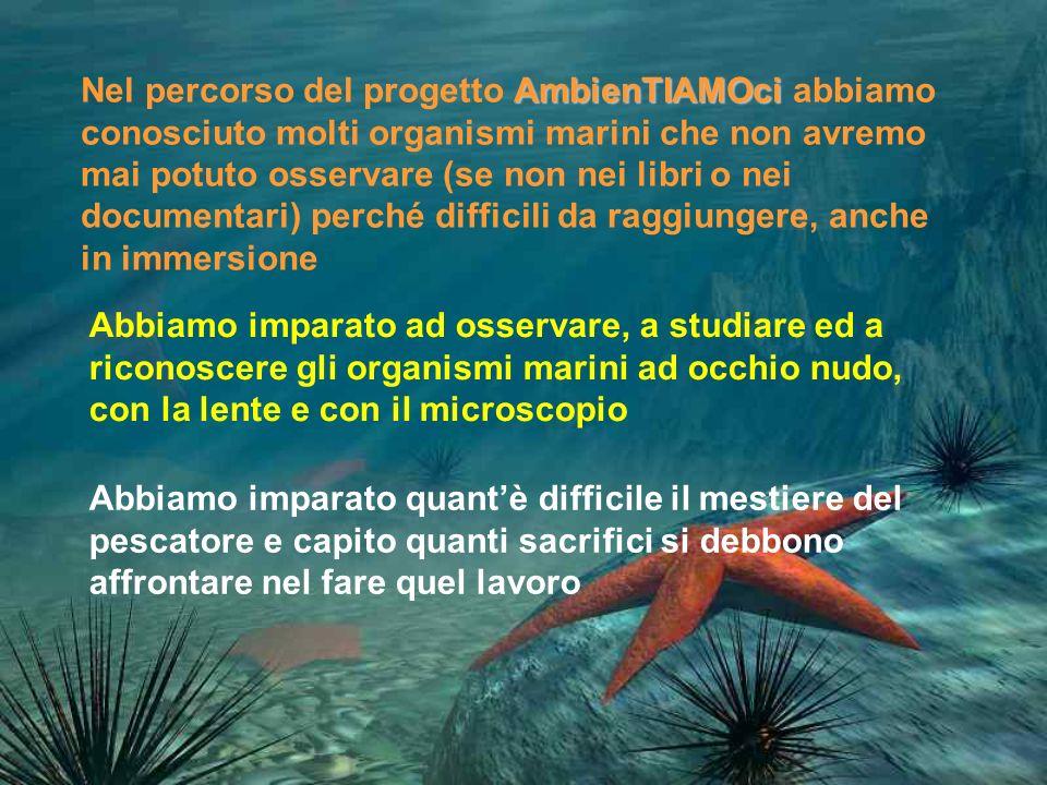 Nel percorso del progetto AmbienTIAMOci abbiamo conosciuto molti organismi marini che non avremo mai potuto osservare (se non nei libri o nei documentari) perché difficili da raggiungere, anche in immersione