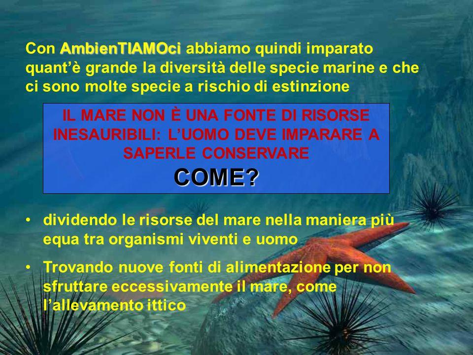 Con AmbienTIAMOci abbiamo quindi imparato quant'è grande la diversità delle specie marine e che ci sono molte specie a rischio di estinzione