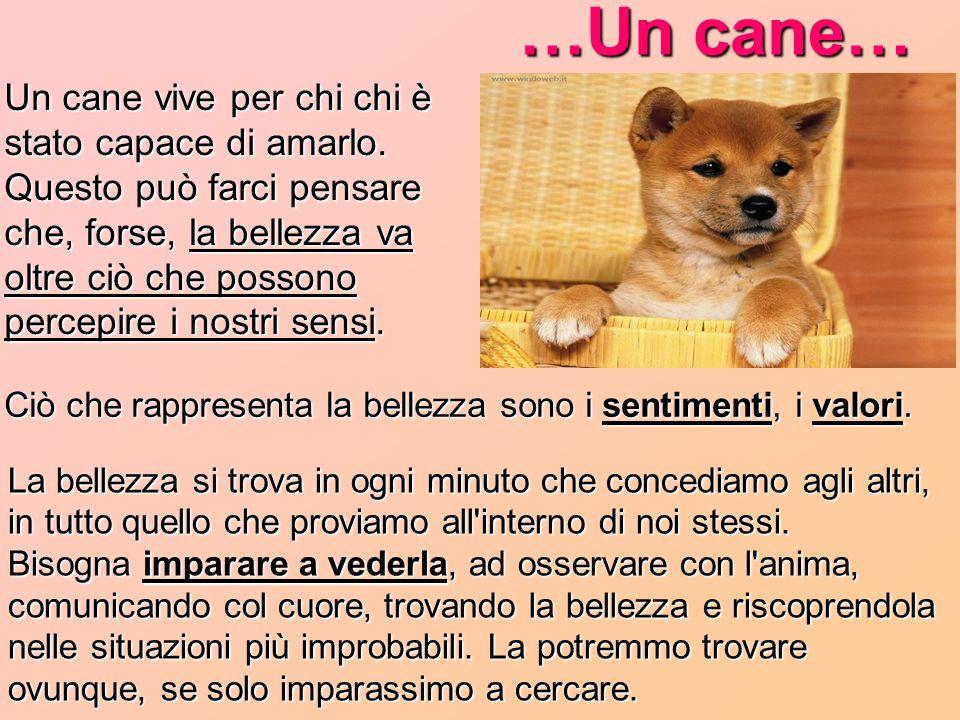 …Un cane…