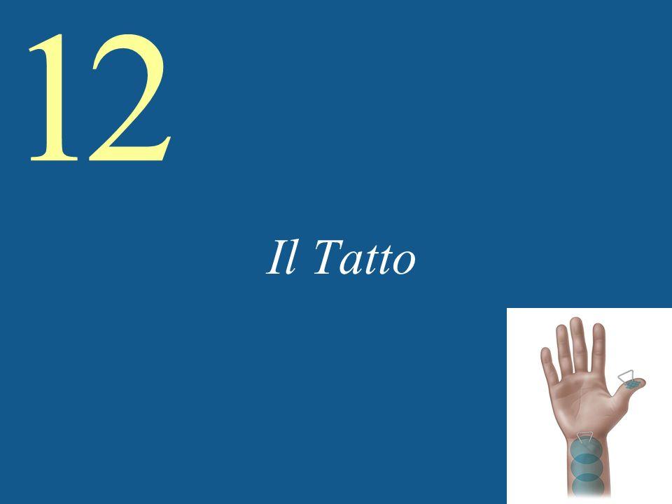 Il Tatto