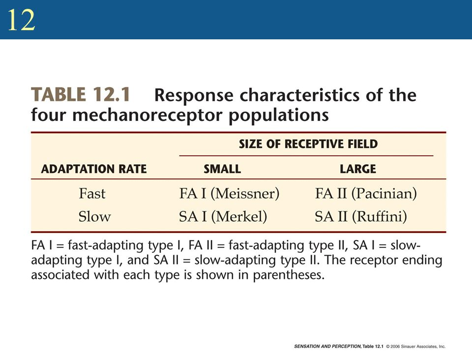 Show table of response characteristics of mechanoreceptors (Table 12