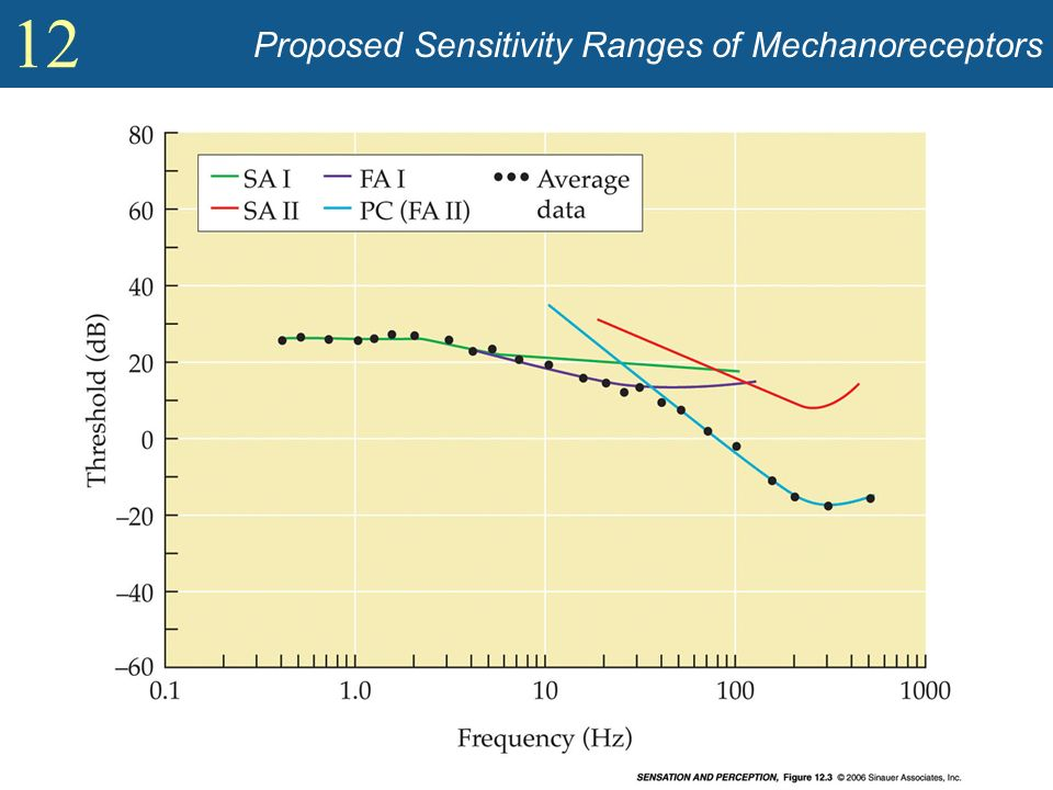 Proposed Sensitivity Ranges of Mechanoreceptors