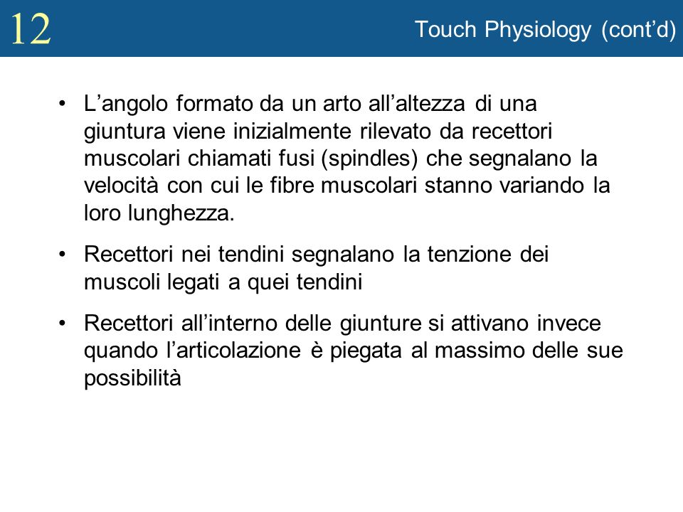 Touch Physiology (cont'd)