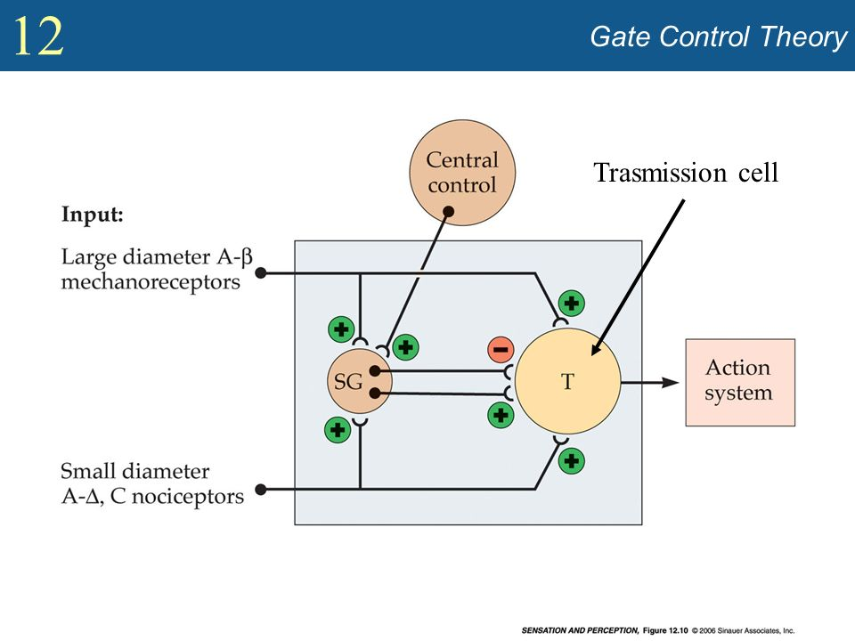 Gate Control Theory Trasmission cell