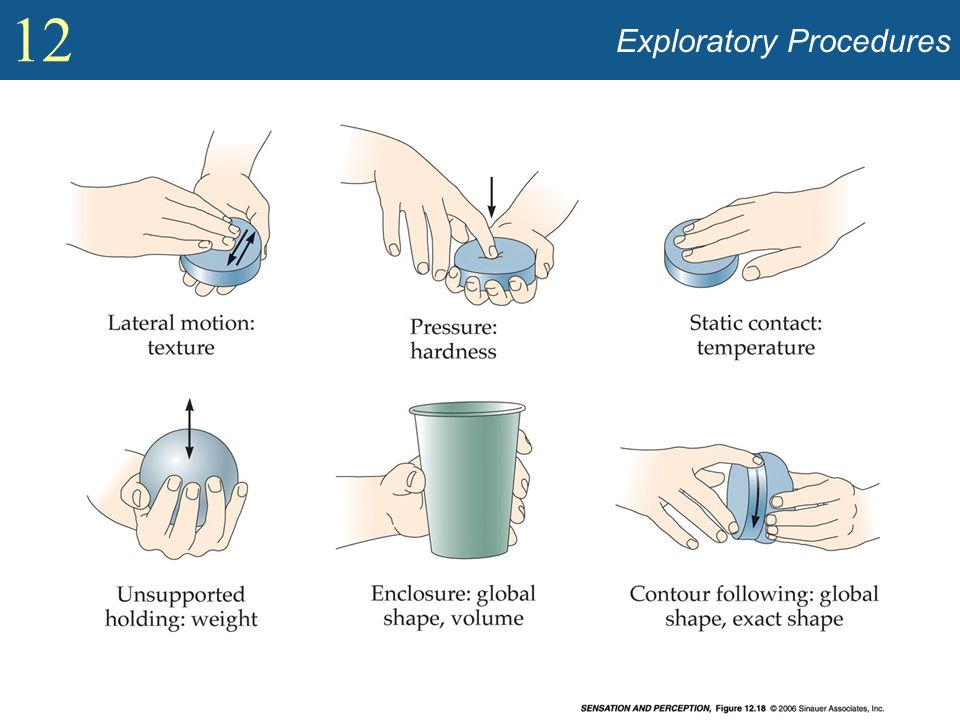 Exploratory Procedures