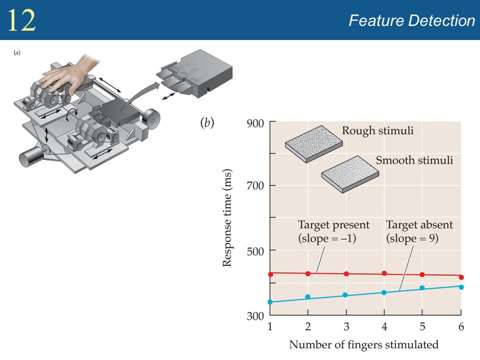 Feature Detection Show apparatus used to display targets to fingertips by Lederman and Klatzky (Figure 12.20).