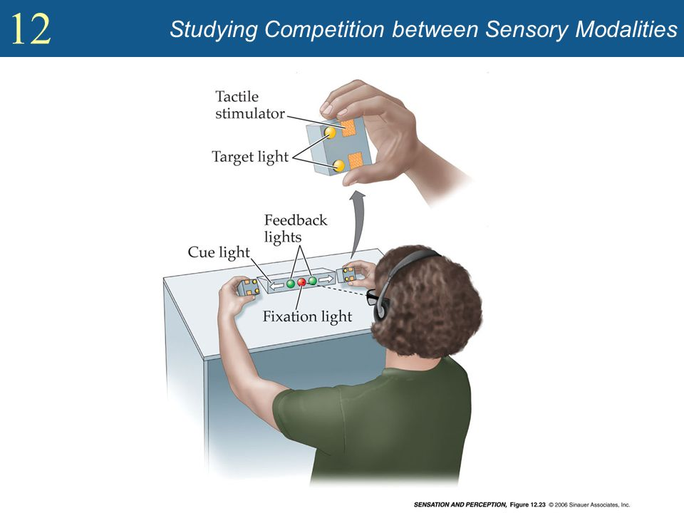 Studying Competition between Sensory Modalities