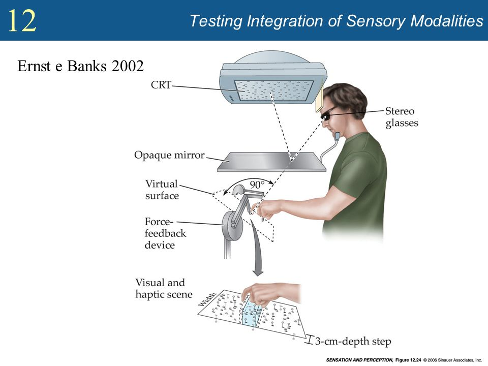 Testing Integration of Sensory Modalities