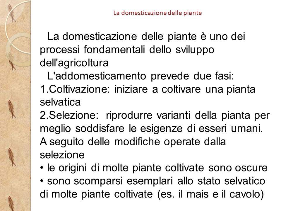La domesticazione delle piante