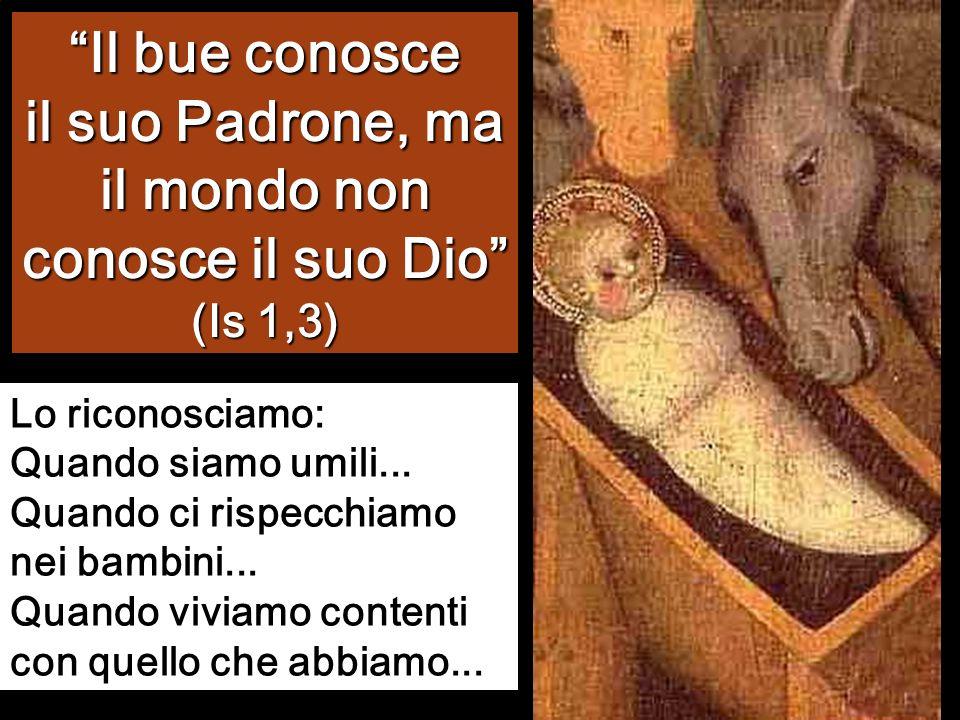Il bue conosce il suo Padrone, ma il mondo non conosce il suo Dio (Is 1,3)