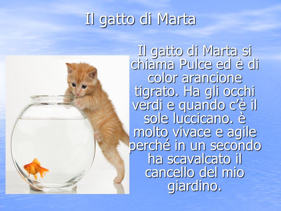 Il gatto di Marta