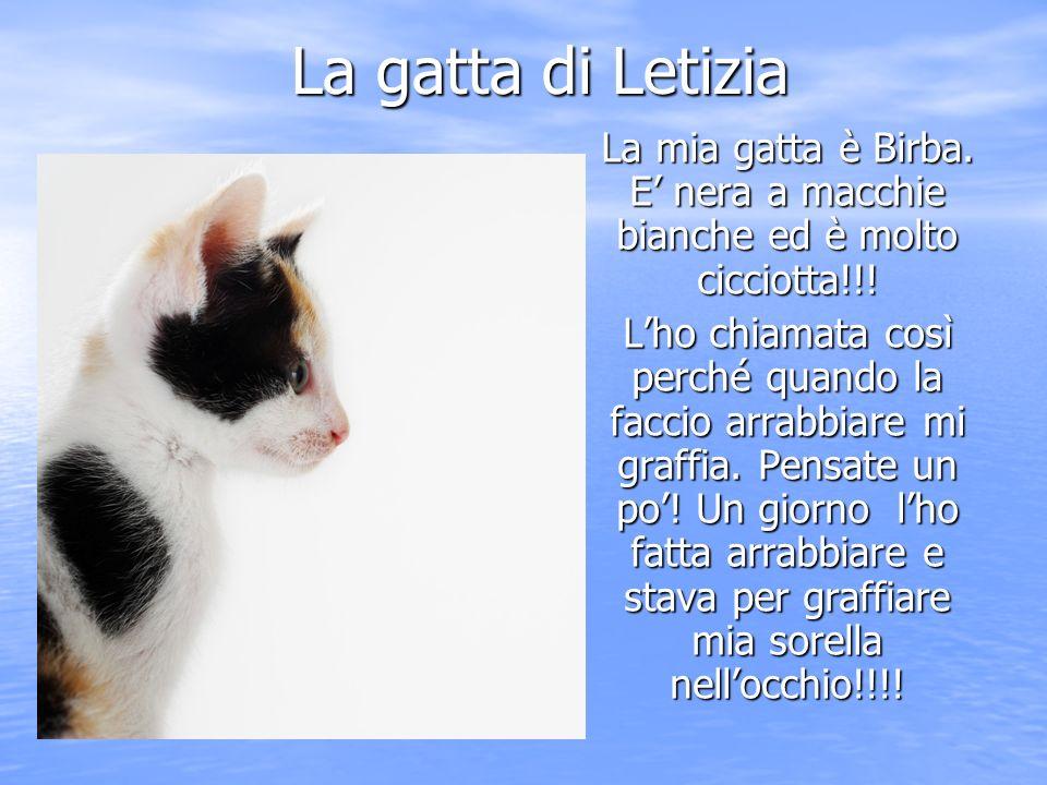 La gatta di Letizia La mia gatta è Birba. E' nera a macchie bianche ed è molto cicciotta!!!