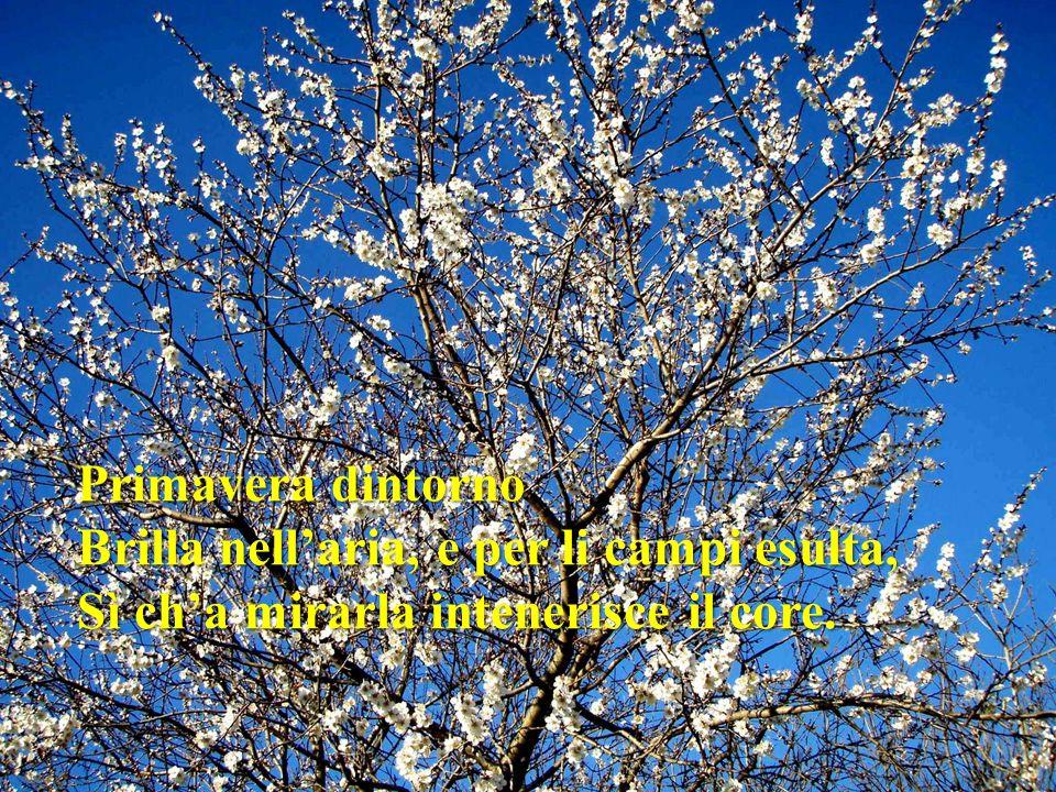 Primavera dintorno Brilla nell'aria, e per li campi esulta, Sì ch'a mirarla intenerisce il core.