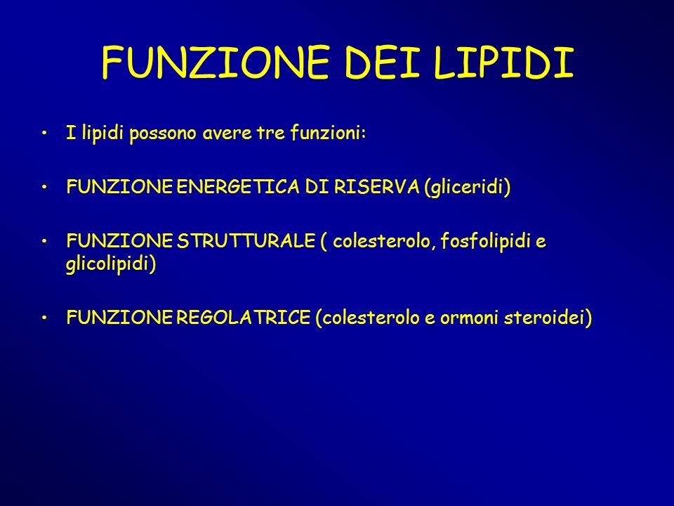 FUNZIONE DEI LIPIDI I lipidi possono avere tre funzioni:
