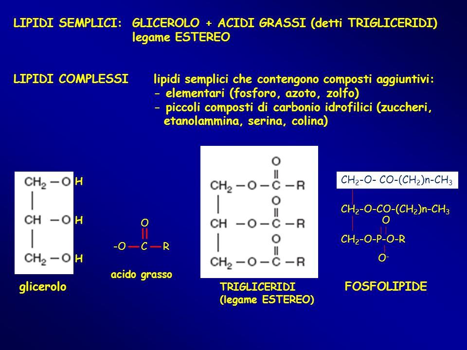 LIPIDI SEMPLICI: GLICEROLO + ACIDI GRASSI (detti TRIGLICERIDI)