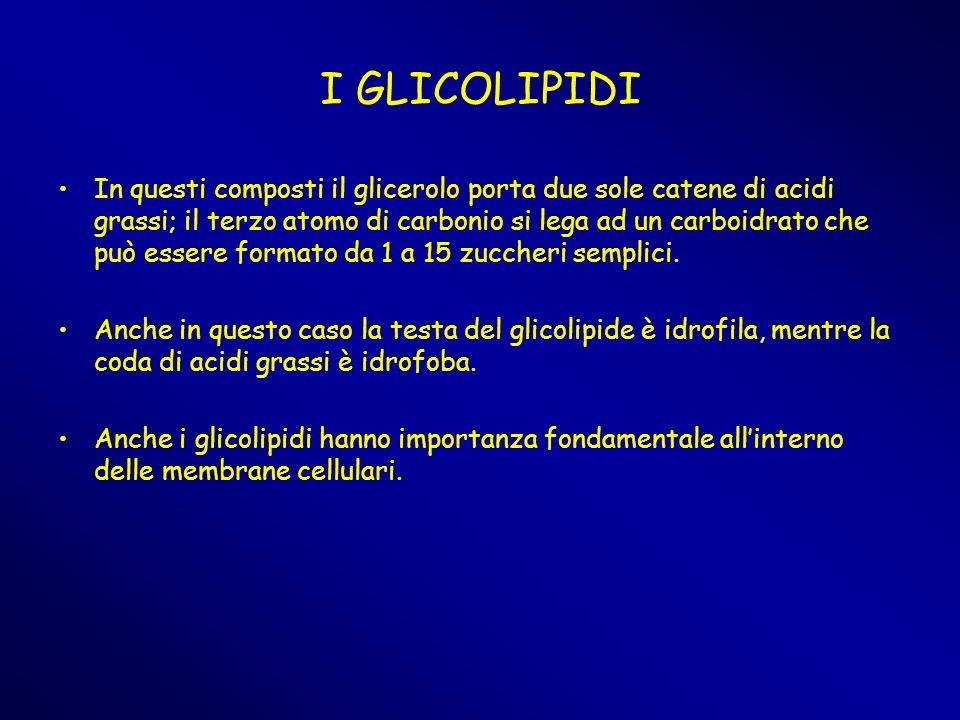 I GLICOLIPIDI