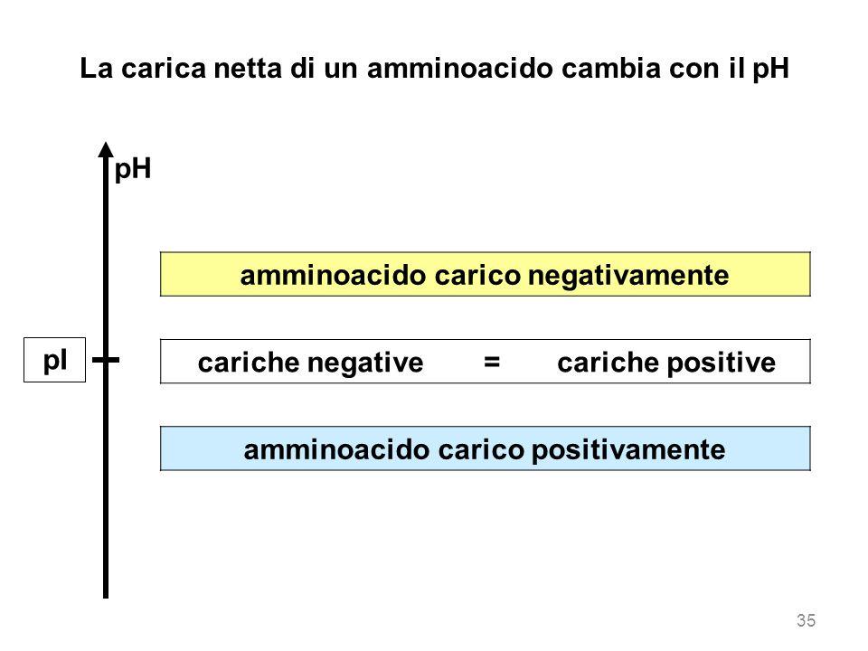 La carica netta di un amminoacido cambia con il pH