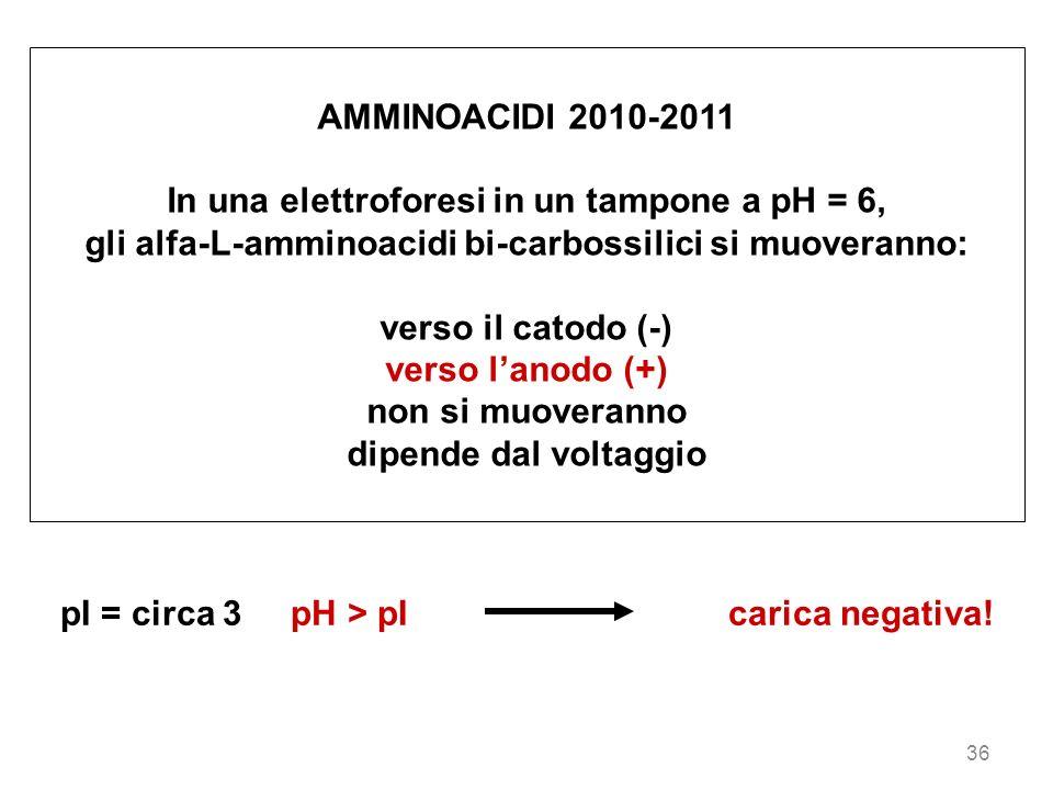 In una elettroforesi in un tampone a pH = 6,