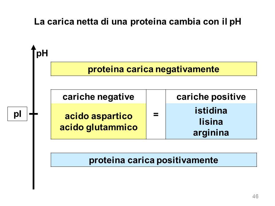 La carica netta di una proteina cambia con il pH