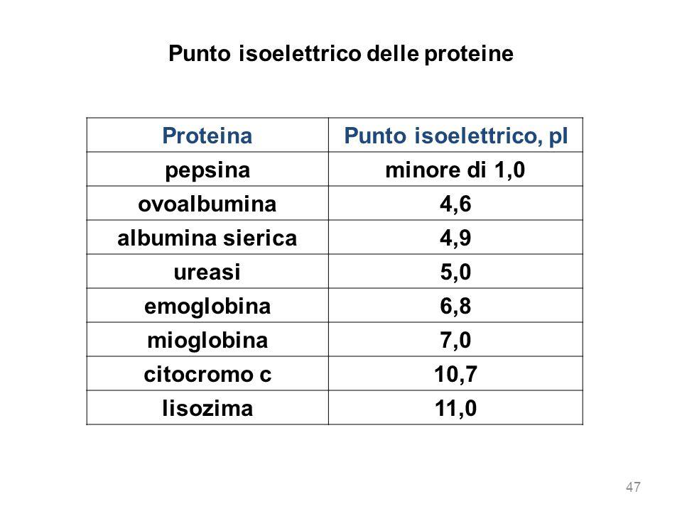 Punto isoelettrico delle proteine