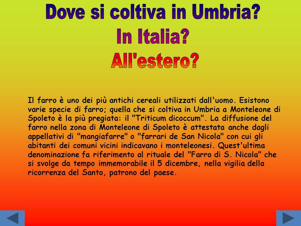Dove si coltiva in Umbria