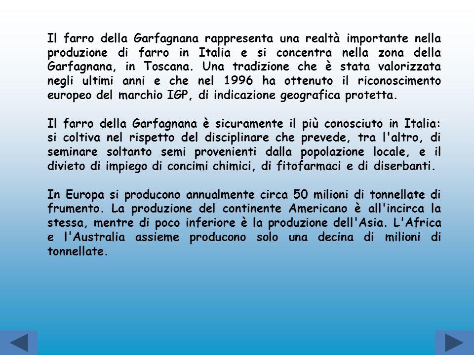 Il farro della Garfagnana rappresenta una realtà importante nella produzione di farro in Italia e si concentra nella zona della Garfagnana, in Toscana. Una tradizione che è stata valorizzata negli ultimi anni e che nel 1996 ha ottenuto il riconoscimento europeo del marchio IGP, di indicazione geografica protetta.