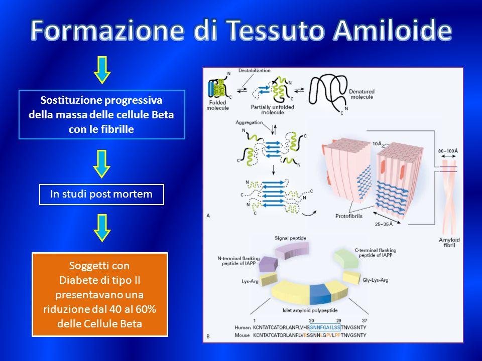 Formazione di Tessuto Amiloide