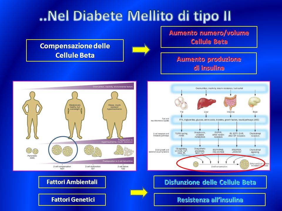 ..Nel Diabete Mellito di tipo II