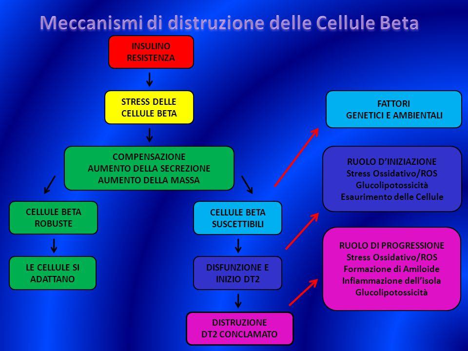 Meccanismi di distruzione delle Cellule Beta