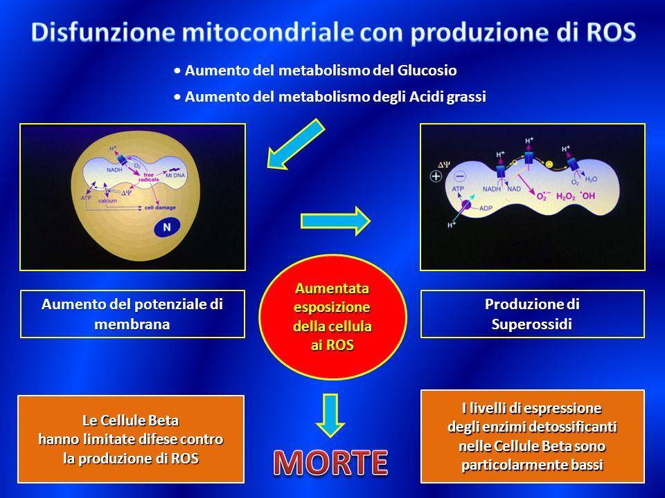MORTE Disfunzione mitocondriale con produzione di ROS