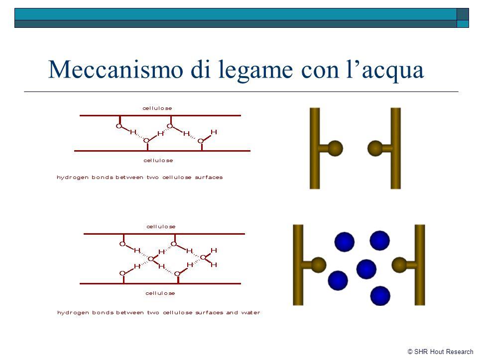 Meccanismo di legame con l'acqua