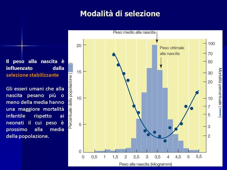 Modalità di selezione Il peso alla nascita è influenzato dalla selezione stabilizzante.