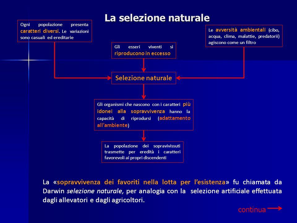 La selezione naturale Selezione naturale