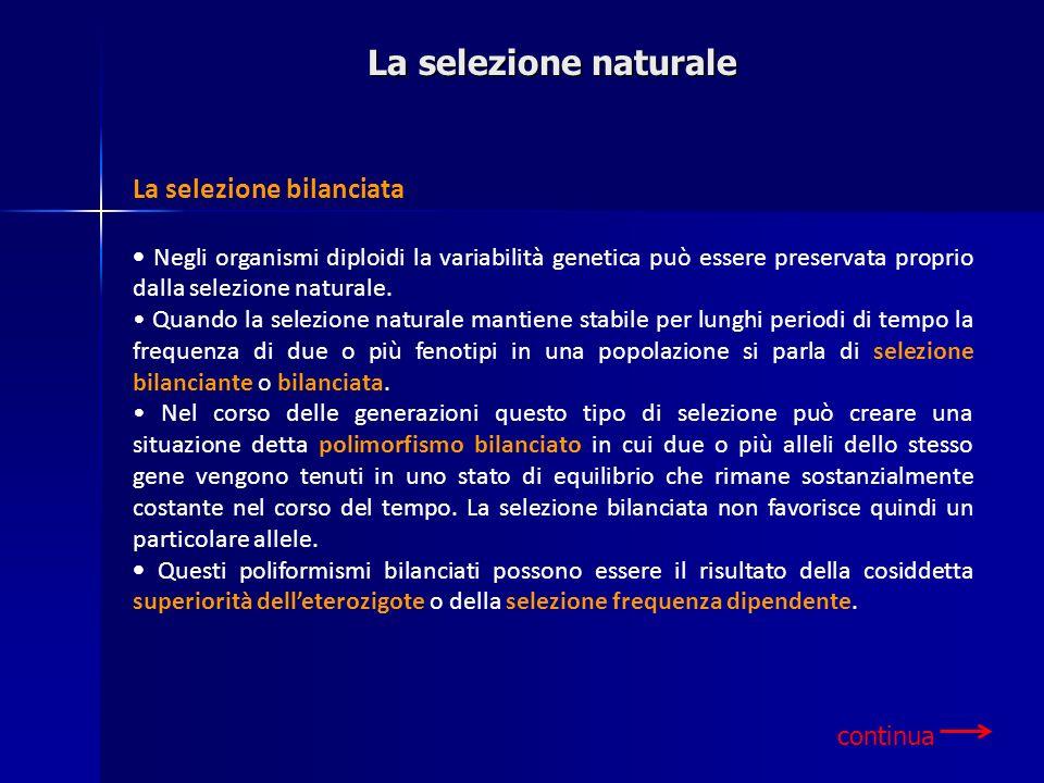 La selezione naturale La selezione bilanciata