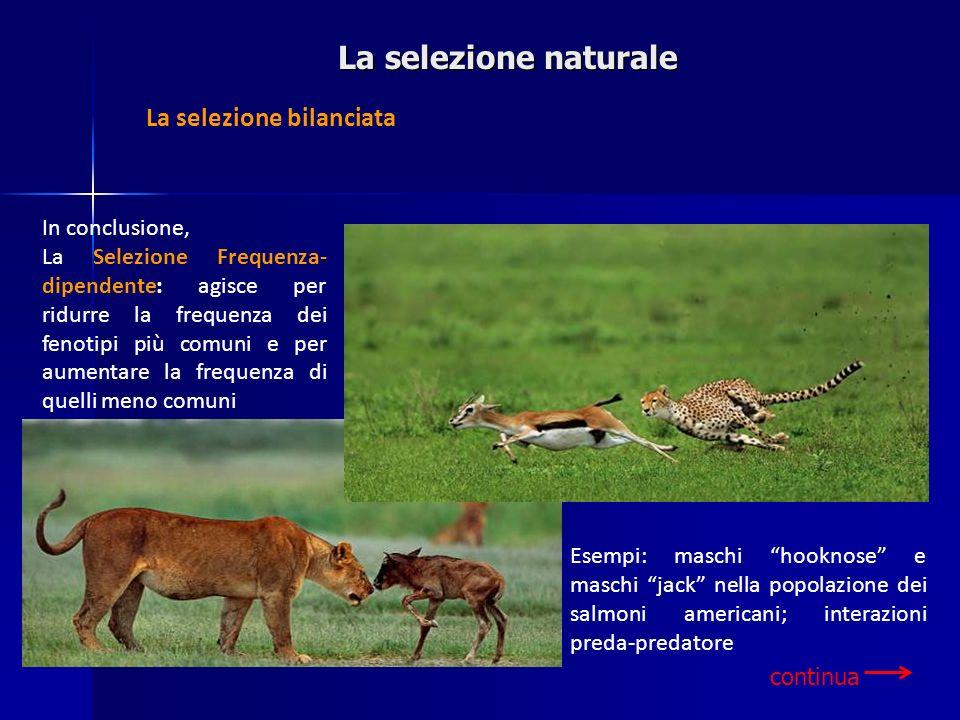 La selezione naturale La selezione bilanciata In conclusione,