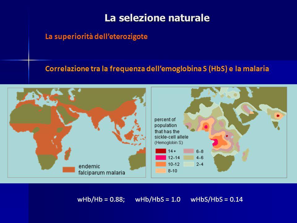 La selezione naturale La superiorità dell'eterozigote