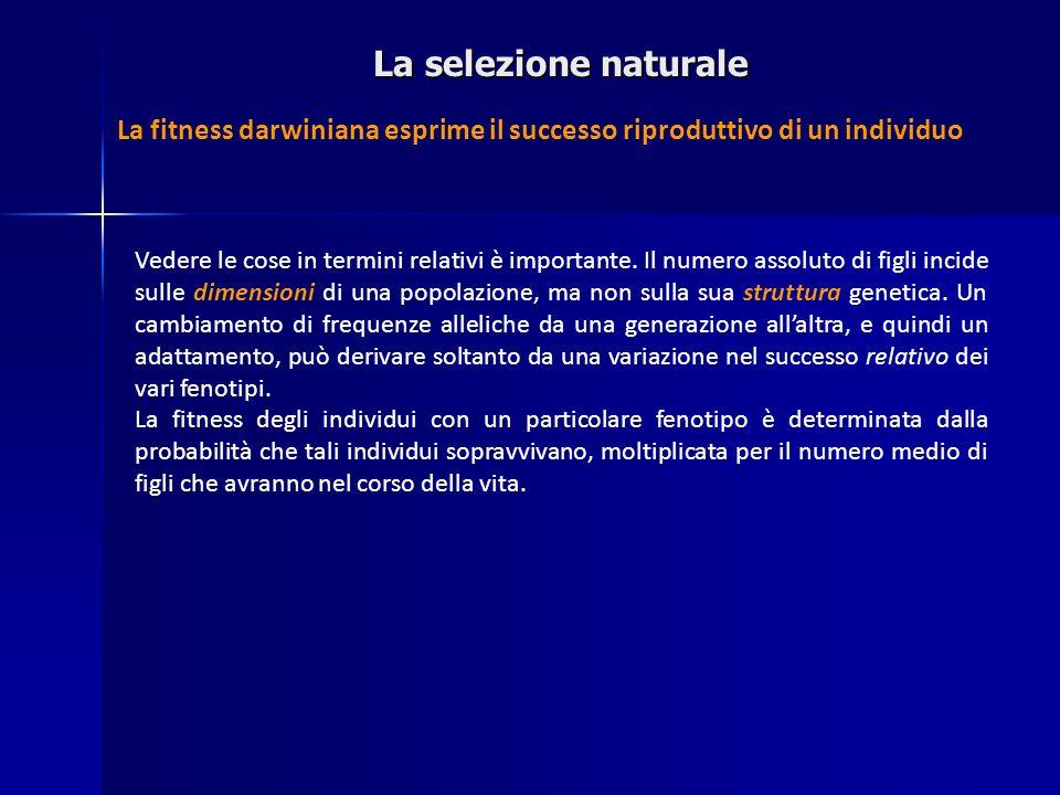 La selezione naturale La fitness darwiniana esprime il successo riproduttivo di un individuo.