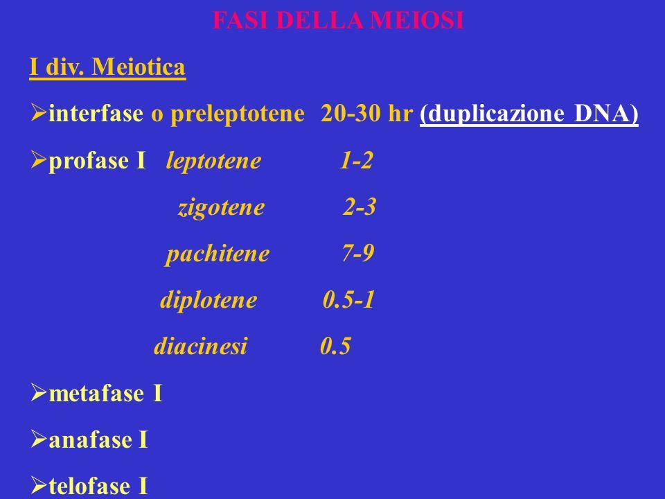 FASI DELLA MEIOSI I div. Meiotica. interfase o preleptotene 20-30 hr (duplicazione DNA) profase I leptotene 1-2.